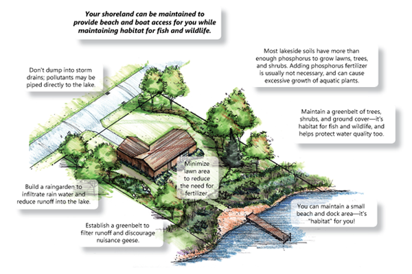 Example of good shoreline management diagram