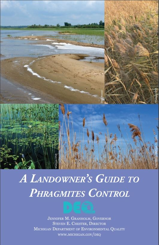 Click guide to be brought to DEQ's Landowner's Guide to Phragmites Control