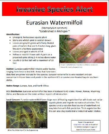 Click to be brought to Eurasian Watermilfoil Invasive Species Alert - Printable PDF